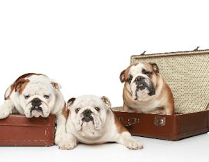 header_dogs